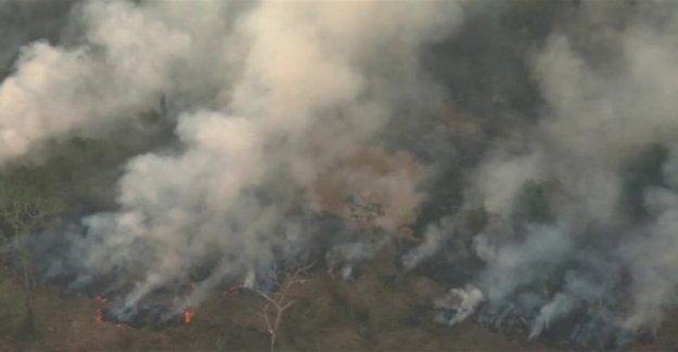 Greenpeace: los incendios en el Amazonas tiene un impacto en el cambio climático