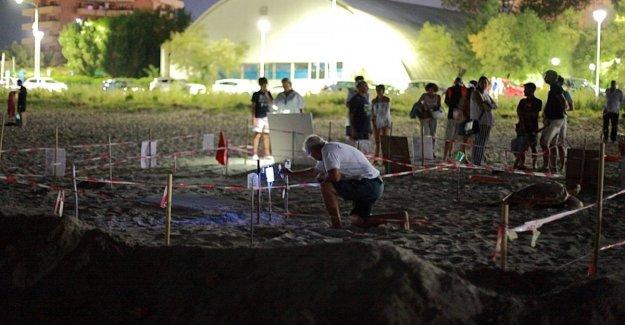 Los guardianes de las tortugas: En la playa de noche y de día para defender el nido Lucianona
