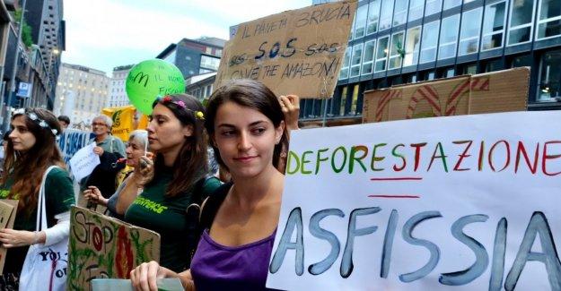 Amazon, la alarma de la deforestación: más de un 300% en un año