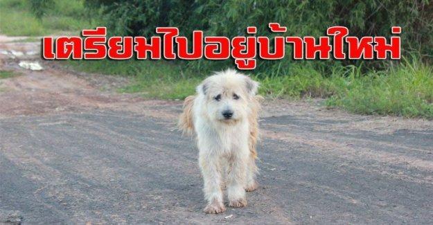 La increíble historia de Leo, el perro que ha esperado por los propietarios durante cuatro años en una encrucijada. Y la encontré