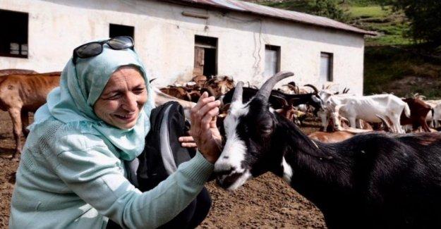 Siria, las lluvias mejorar los cultivos, pero las familias siguen luchando para sobrevivir