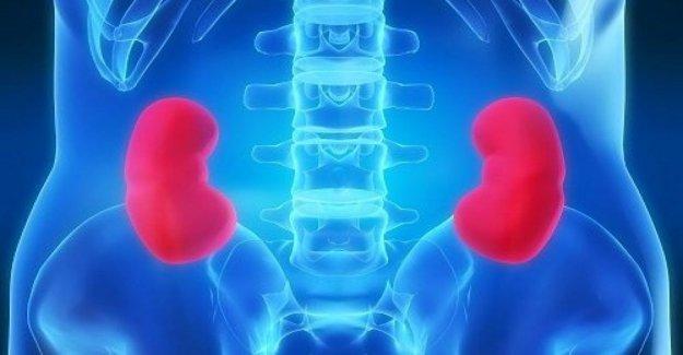 Cáncer de riñón, en Italia se vive más que la media europea