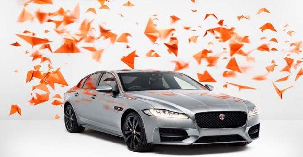 Jaguar y Rankin, el arte celebra la unidad