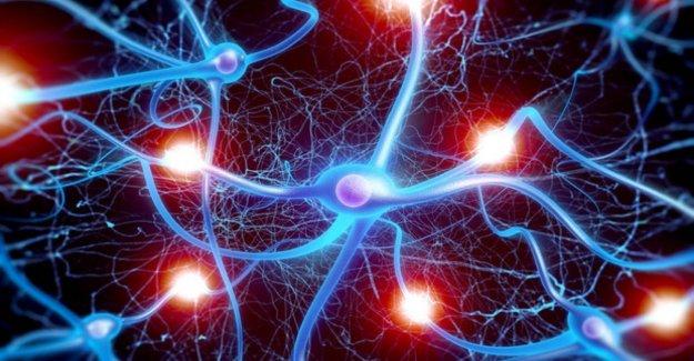 La vida y muerte de las neuronas, ahora es más claro como sucede