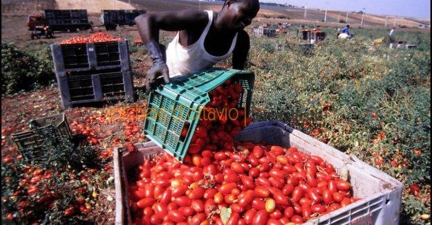 Los trabajadores agrícolas, los de los 7.000 a los migrantes, de bajo costo para recoger un tercio de la producción nacional