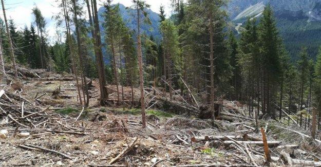 Reforestación en el crowdfunding, 16.500 árboles adoptados en las zonas de tormenta Goto