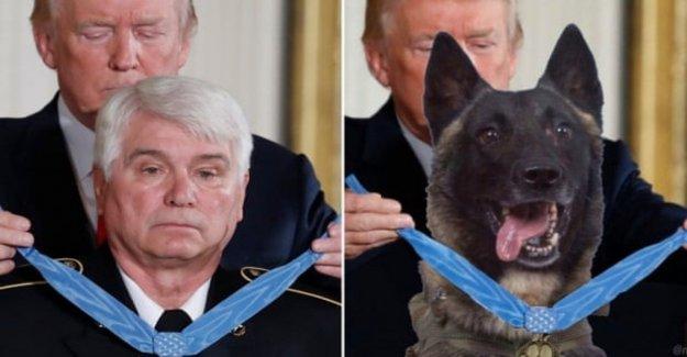 Trump recompensas que el perro héroe de Conan. Pero la foto es un fake