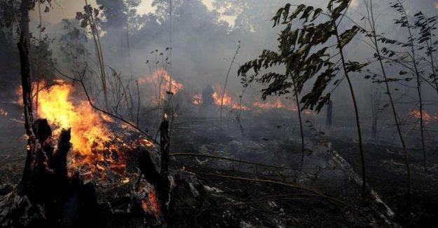 Amazon: appiccavano incendios, detenido el 4 de voluntarios de la Ong. Pero la izquierda acusa: el Marco para dar una razón para Bolsonaro