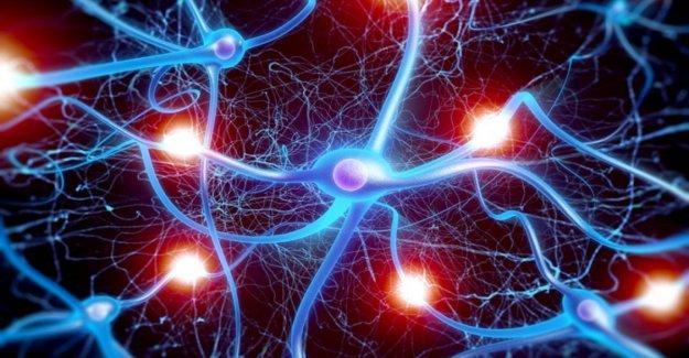 Cnr: descubierto un nuevo mecanismo de regulación de la creación de sinapsis