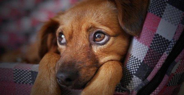 No gritar a su perro: no es bueno para su salud mental
