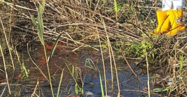 Salento, el rendimiento de los peces de colores en los charcos en el campo: Pero ellos son un peligro para el ecosistema