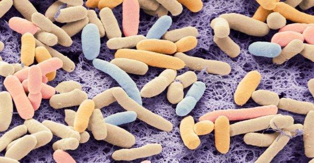 Aquellas bacterias que se alimentan de CO2 y la producción de biocombustibles