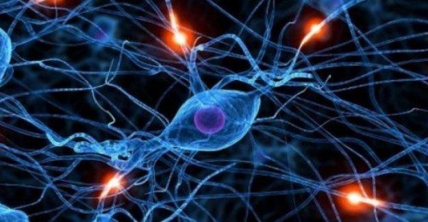 Creó la primera de las neuronas en el artificial. Sanar las enfermedades crónicas y degenerativas
