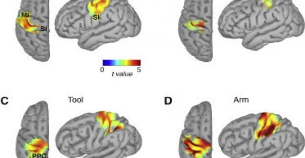 El cerebro se extiende la percepción de que el cuerpo las herramientas que tenemos en la mano