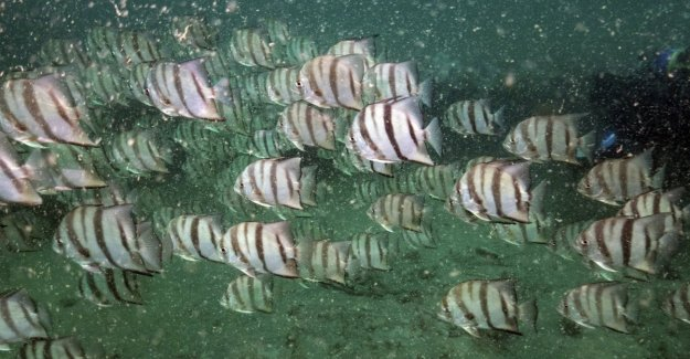 Menos y menos oxígeno en los océanos: una amenaza para la biodiversidad