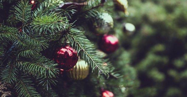 Para cancelar, el árbol de Navidad real es mejor que el plástico.