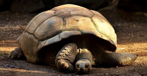 Que la memoria, portentosa, esas tortugas gigantes