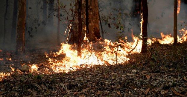 Los incendios forestales en Australia: el presupuesto que 24 están muertos, La reina Isabel: Triste, gracias a aquellos que arriesgan sus vidas para salvar a la gente.