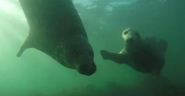 Así que las focas aplauden sus aletas en la estación del amor