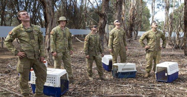 Australia, ya es oficial: todos los fuegos están bajo control