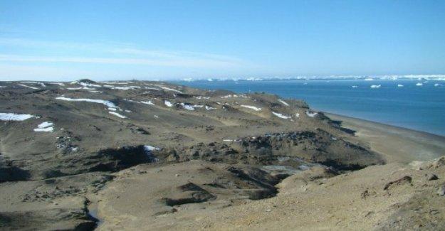 La antártida, nuevo récord caliente, superó los 20 grados
