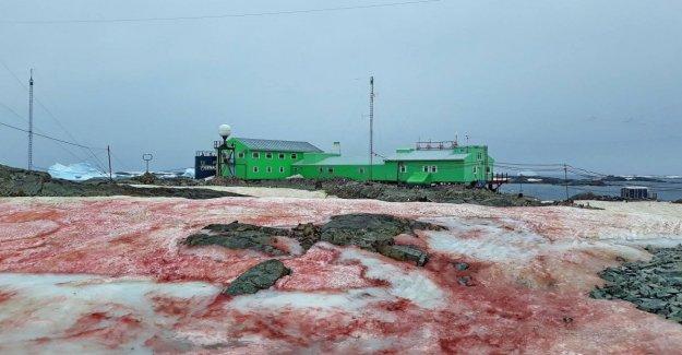La antártida se tiñe de rojo a causa de las algas. Se agrava el derretimiento del hielo