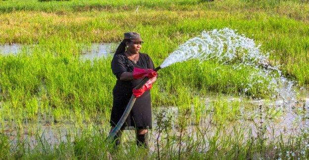 La lucha contra el cambio climático para combatir el hambre. La apelación del Fida a los proyectos agrícolas de la próxima década