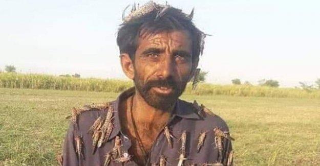 Pakistán, es una emergencia nacional por la invasión de las langostas, el remate de la ministra: Mangiatele