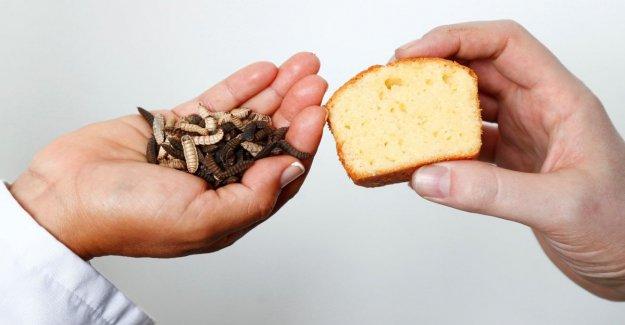 Desde Bélgica vienen los gofres a la mantequilla de la larva