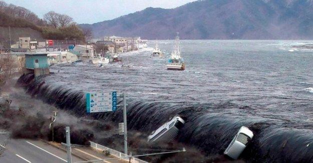 Japón, hace 9 años, el tsunami de 2011: esta es la historia de los hombres que buscan todavía los cuerpos de las víctimas