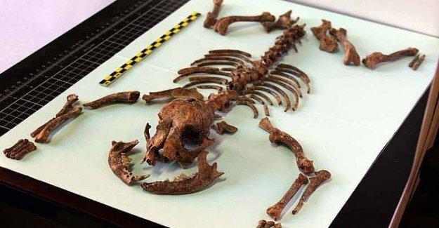 Los perros vivían como animales de compañía ya hace dos mil años