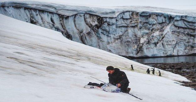 De la antártida, la 'verde de la nieve mapeadas desde el espacio