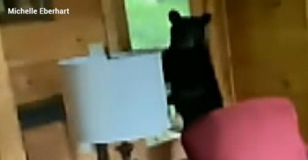 El oso negro se rompe en Tennessee alquiler de vacaciones, roba libras de dulces, bolsas de fichas