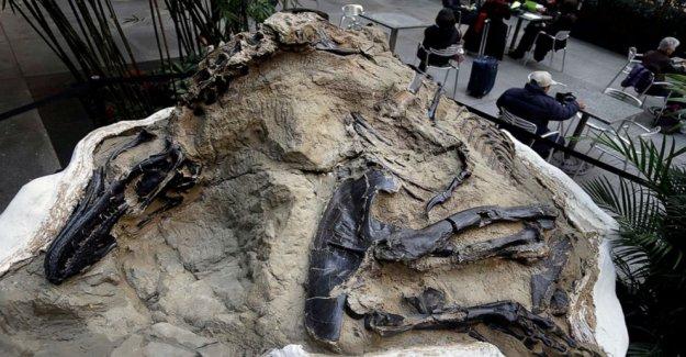 La corte dice que los fósiles de dinosaurios que vale millones no son minerales