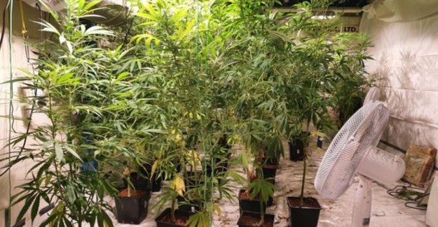 La sospecha de cannabis por valor de más de £600 mil incautados