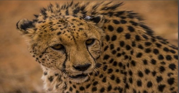 COVID-19 de bloqueo revela el impacto humano sobre la vida silvestre, dicen los investigadores