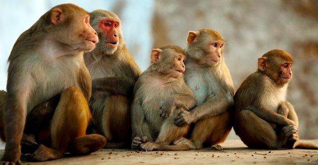 Coronavirus tratamiento remdesivir reducido virus en monos, a los investigadores a encontrar