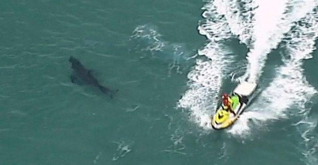 De 10 pies de largo los ataques de tiburones, mata a 60 años de edad, surfer