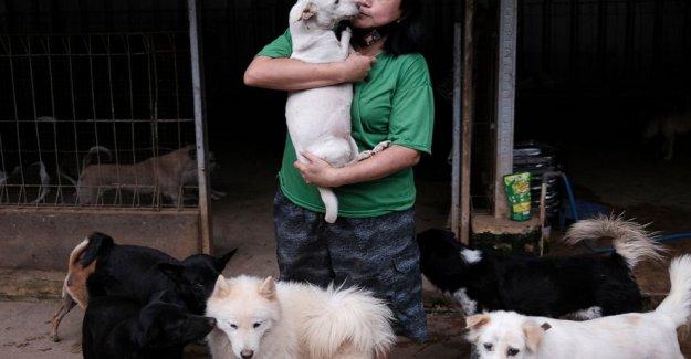 AP FOTOS: Indonesia refugio ve aumento en el abandono de perros