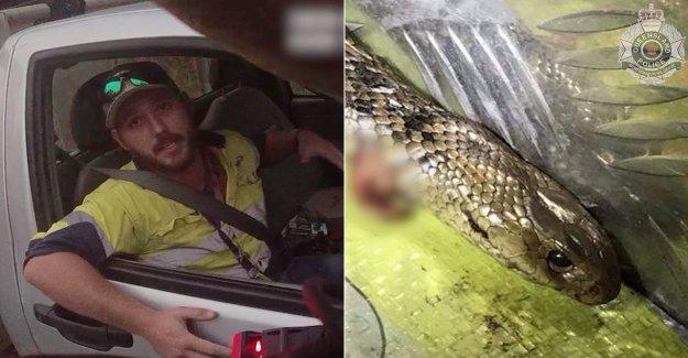 Australia hombre que mantiene a raya venenosa de la serpiente con el cuchillo, cinturón de seguridad mientras que la conducción en la carretera, la policía dice que