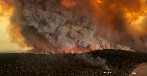 Australia incendios forestales asesinados o desplazados' casi 3 mil millones de animales, declaró entre  lo peor de la vida silvestre desastres en la historia