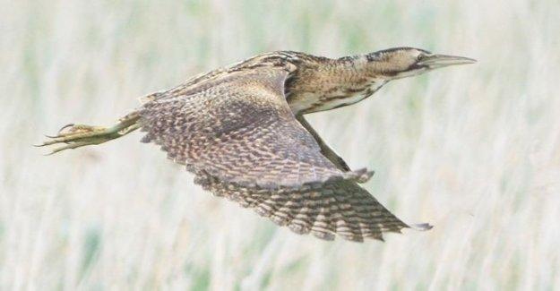 Aves raras razas por primera vez en más de 200 años