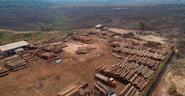Brasil Bolsonaro, impone a los 4 meses de prohibición de los fuegos para preservar Amazon