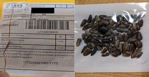 China planta de semillas de misterio resuelto? La policía, los funcionarios creen los paquetes se envían a los hogares podría estar vinculado con la estafa de los comentarios