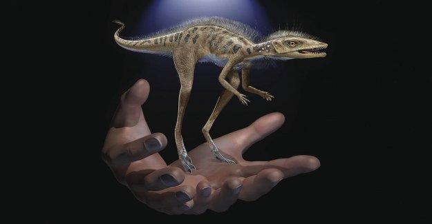 Científicos descubren un diminuto dinosaurio antepasado: una de 4 pulgadas 'pequeño bug slayer'