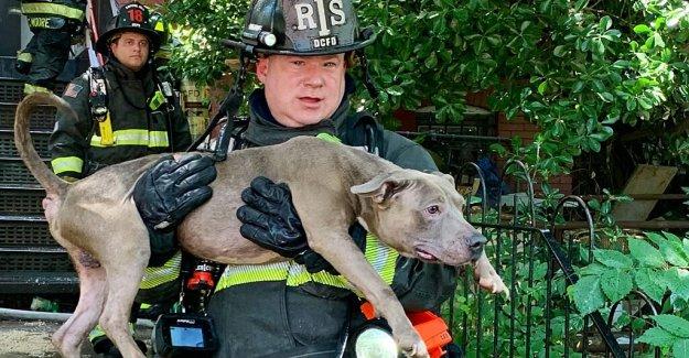 DC bomberos de rescate de 6 perros de la casa en llamas, revivir a 1 en el calor sofocante