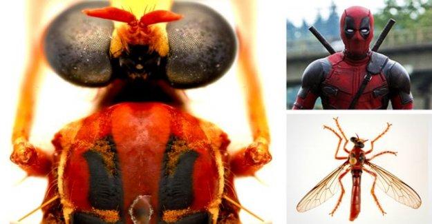 Deadpool volar entre las nuevas especies de la creación de un zumbido