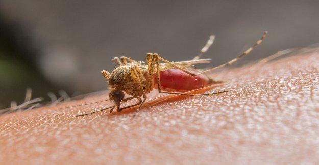 El Condado de Los Ángeles informes de primera humanos de virus del Nilo Occidental casos de la temporada