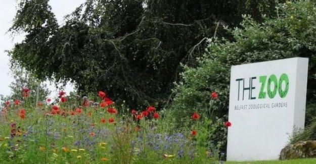 El Zoológico de Belfast para volver a abrir con el público instó a la pre-reserva