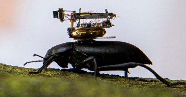 Escarabajo de la cámara montada en arroyos de insectos aventuras